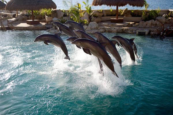 Dolphinaris Cozumel 5.jpg