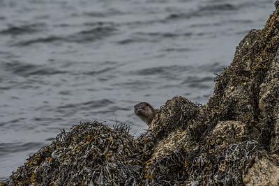 Shetland Islands 2017