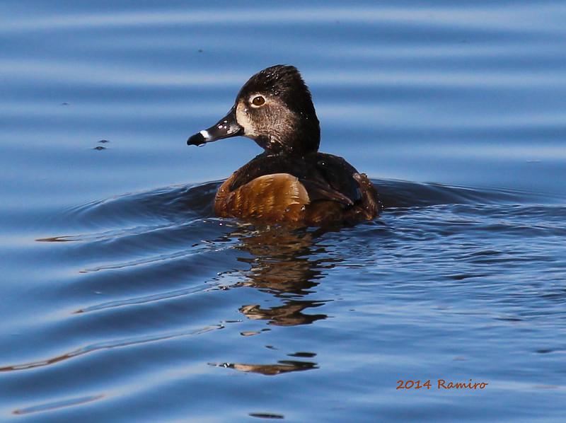 duck 3-6-15 340.jpg