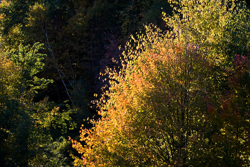 Light on the trees outside our apartment -- autumn is here.