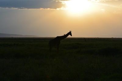 1494239968African-Safari-9.jpg