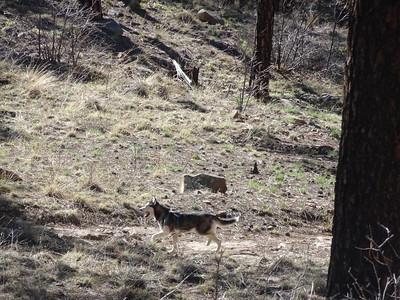 2019-04-20 Pajarito Canyon