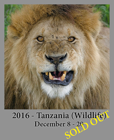 12-08-2016  Africa Tanzania : The Great Migration and The Big Cats