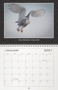 2021 - My Favorite Critters Months