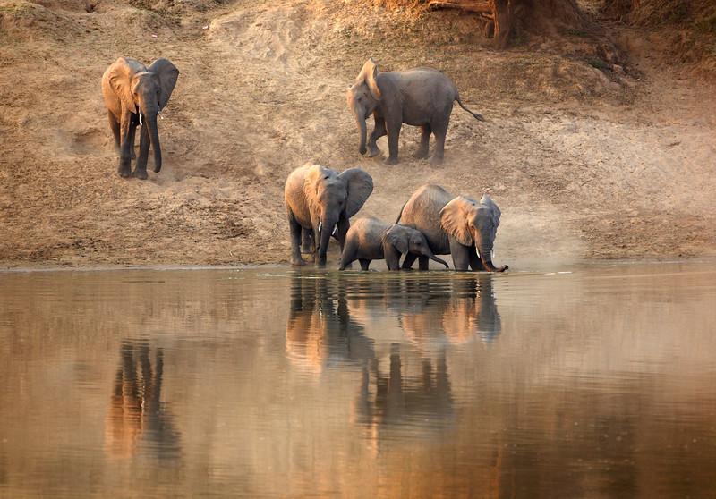 Elephant - 1291.jpg