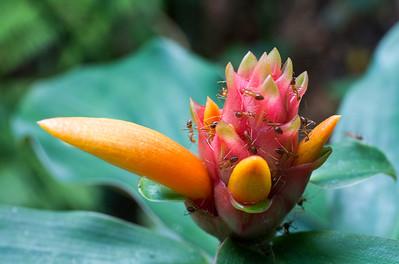 Penang Spice Garden