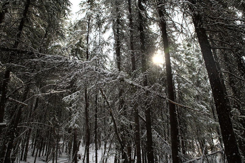 One Last Snow