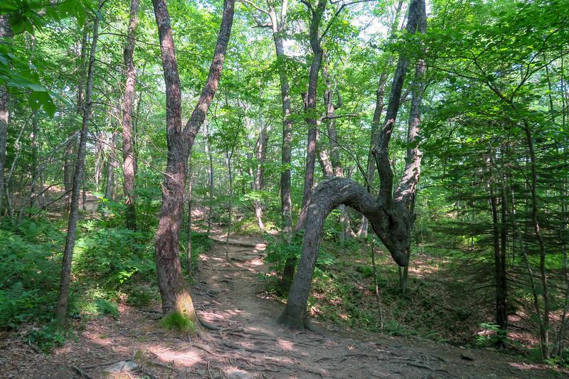 MST Access Trail -- 4,490'