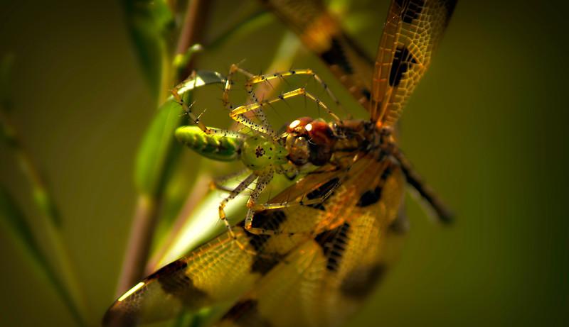 Spiders-Arachnids-017.jpg