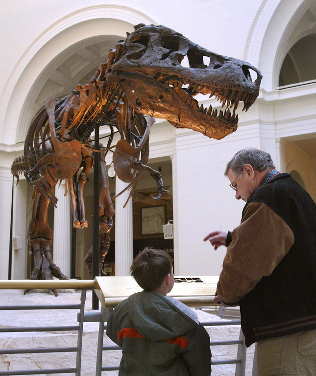 """. 402200 09: Two visitors stop to look at Sue- the largest, most complete, and best preserved Tyrannosaurus Rex fossil yet discovered - outside the \""""Tiniest Giants: Discovering Dinosaur Eggs\"""" exhibit March 12, 2002 at Chicagos Field Museum. The exhibit comes from the 1997 discovery in southern Argentina of the largest nesting site of dinosaur eggs ever found. More than a mile square, the site held tens of thousands of eggs, some containing fossilized embryos so well preserved the scientists could see patterns of reptilian scales in their skin. \""""Tiniest Giants: Discovering Dinosaur Eggs\"""" was developed by the Natural History Museum of Los Angeles County and the Carmen Funes Museum of Argentina. The exhibit is open at the Field Museum through September 2, 2002. (Photo by Tim Boyle/Getty Images)"""
