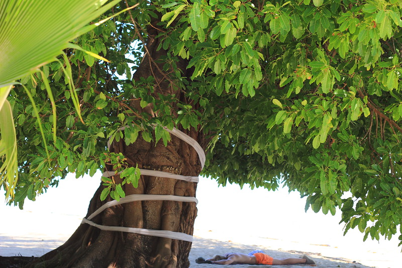 IMG_3289 halfpine tree.JPG