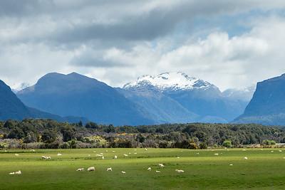 2014 New Zealand