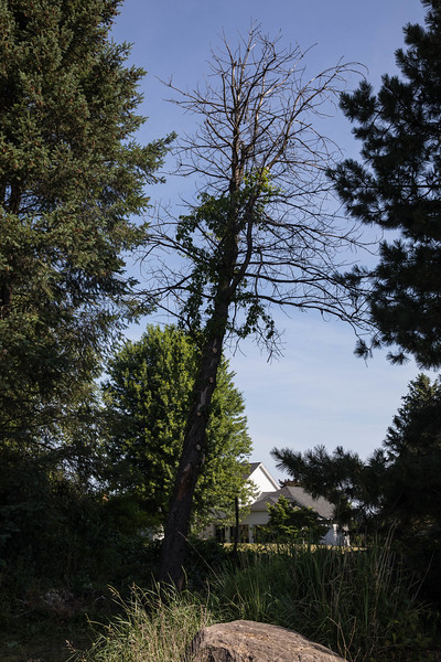 20180713_Trees_6417 PRINT 15X10.jpg