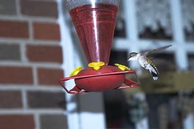 HUMING bIRDS