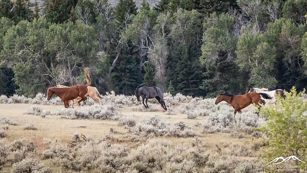 Dubois Horse Ranch