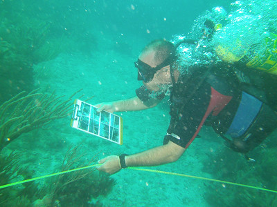 Dry Tortugas underwater