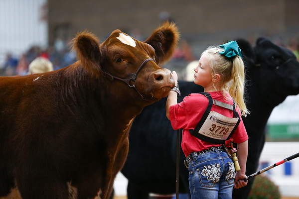 Steer/Heifer Showmanship
