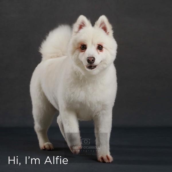 Gaule4822-Alfie.jpg