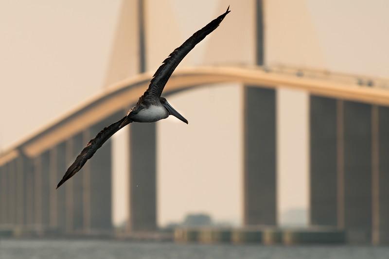 skyway Pelican 1-2.jpg
