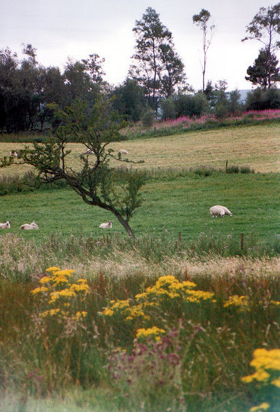 1990_August_Scotland _0007_a.jpg