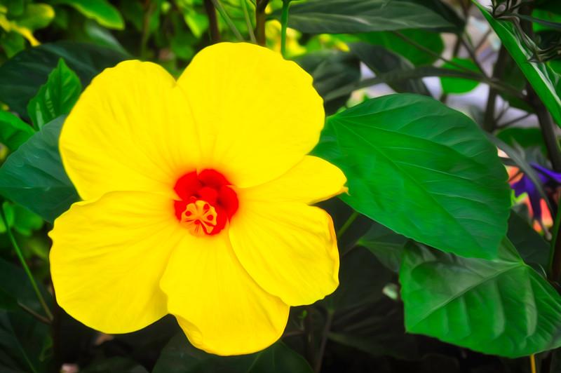 bright flower.jpg
