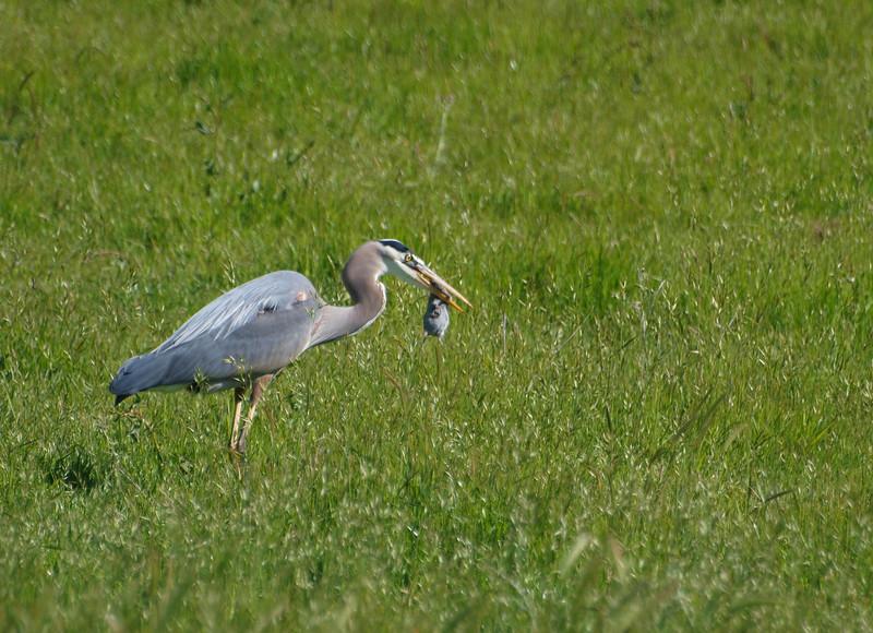 crane22.jpg