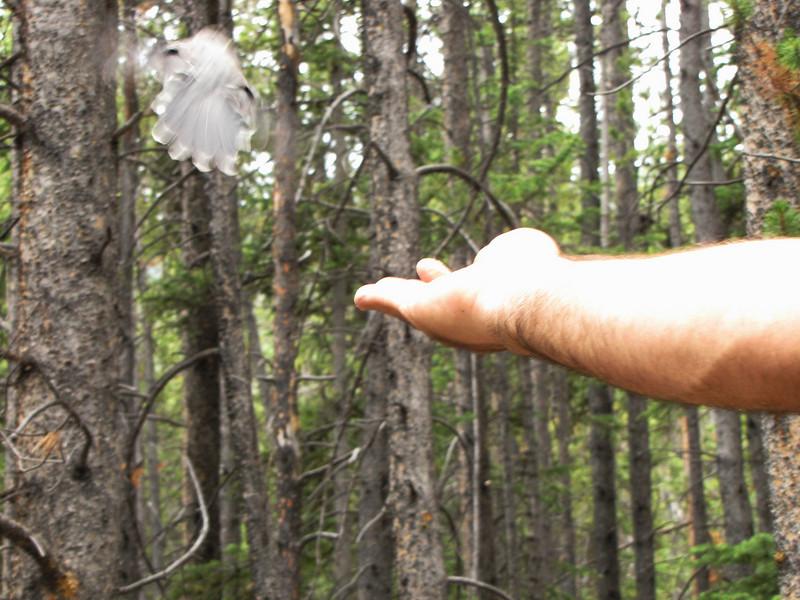 Mt Elbert 7-17-2010 (105).jpg