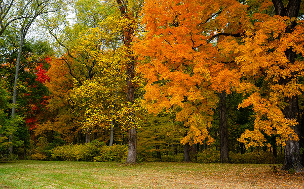Fall Color 2020