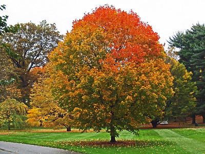 Fall Colors -2009