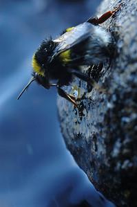 Bugs/Småkryp/Ötökät