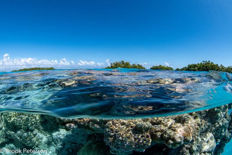 Submerged Coral head