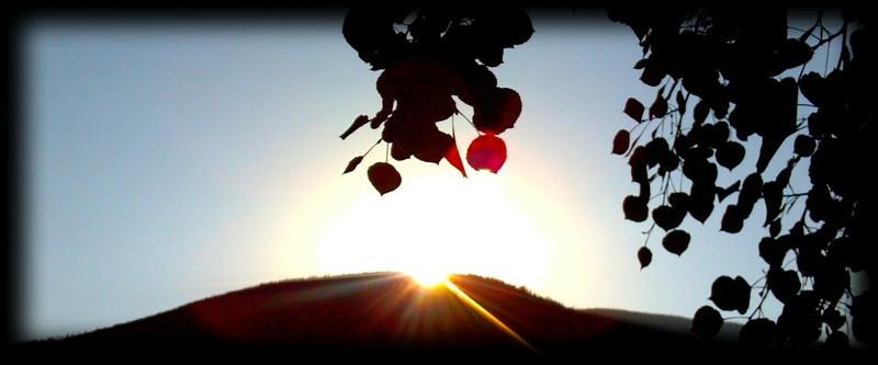 Sunrise thru the aspen.