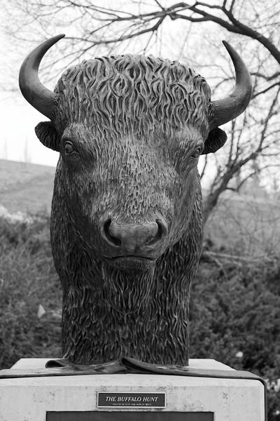 Buffalo bust