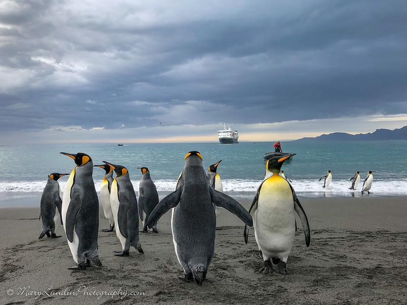 Antarctic-156