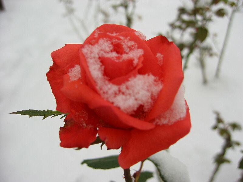 garden-2002-11-0114_std.jpg