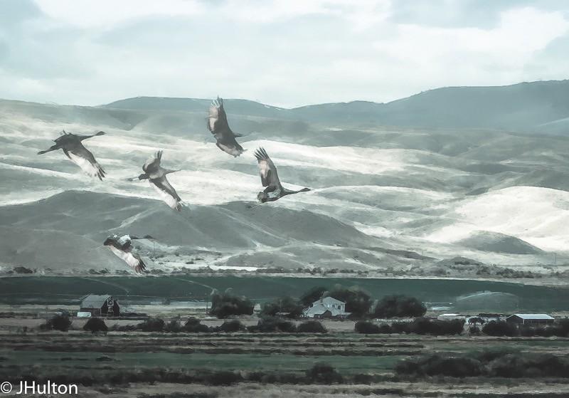 bird-Edit-Edit-Edit-Edit-Edit-Edit-Edit-Edit-Edit-Edit.jpg