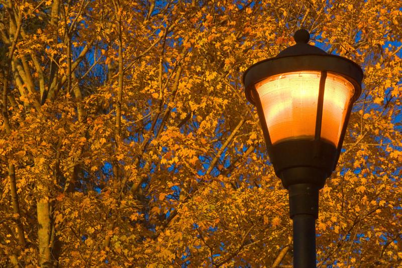 lamp_2509.jpg