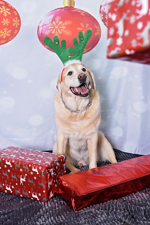 La Petite Woof Pawliday Picture Day