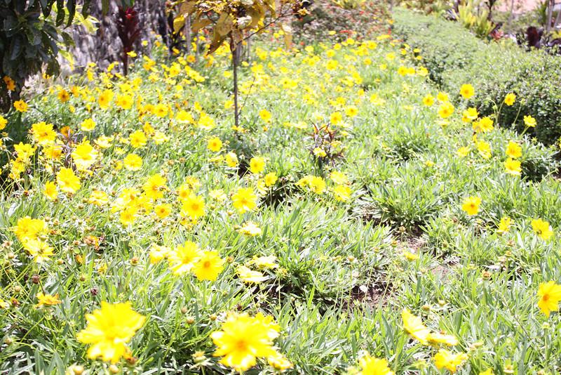 flowers at Rondon Ridge