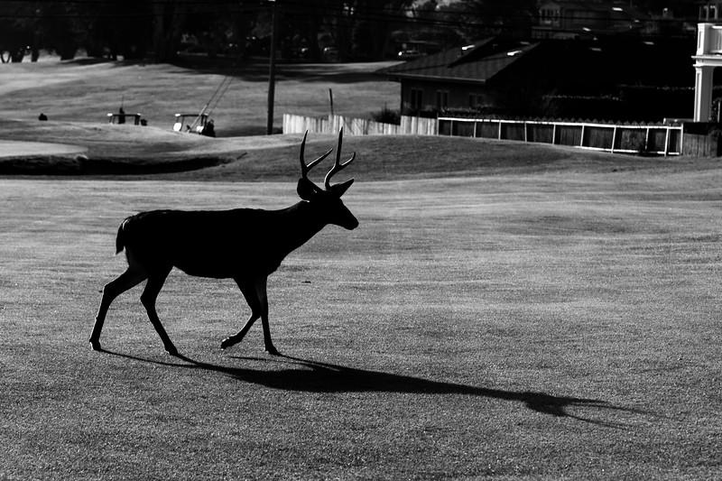 golf tournament moritz492779-28-19.jpg