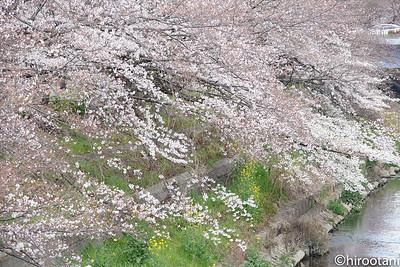 190331Yamazakigawa