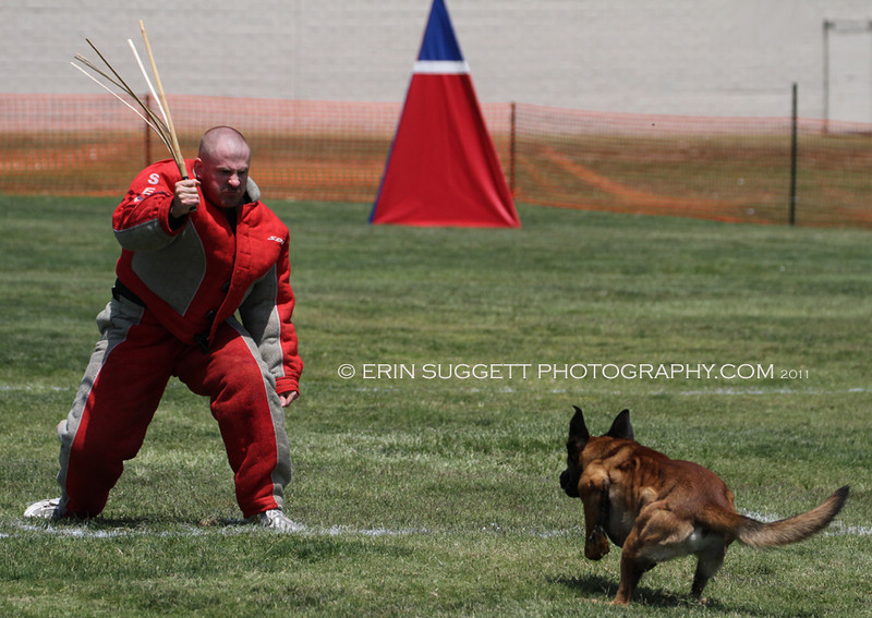 Extreme Ring Dogs host a NARA French Ring Sport competition at Richard Gahr High School in Cerritos, CA on August 13 & 14, 2011 Photos by © Erin Suggett Photography - All Rights Reserved 2011