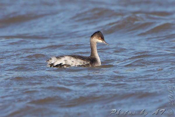 2009-10-31 Riverlands Migratory Bird Sanctuary