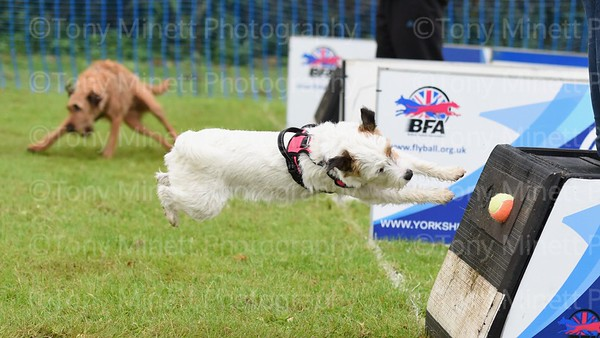 Yorkshire Bouncers Flyball 2019