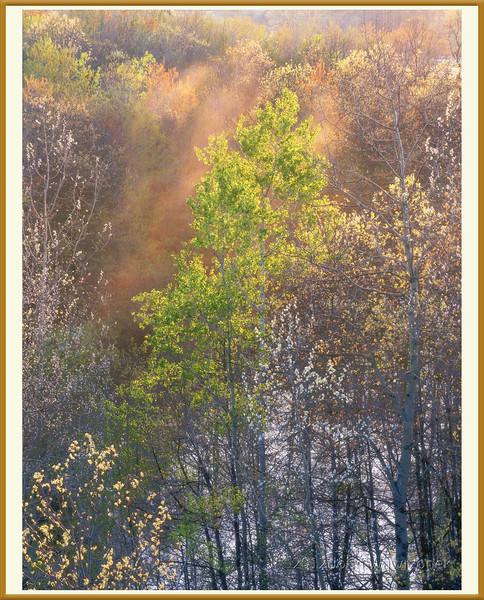 Green Tree and Orange Fog