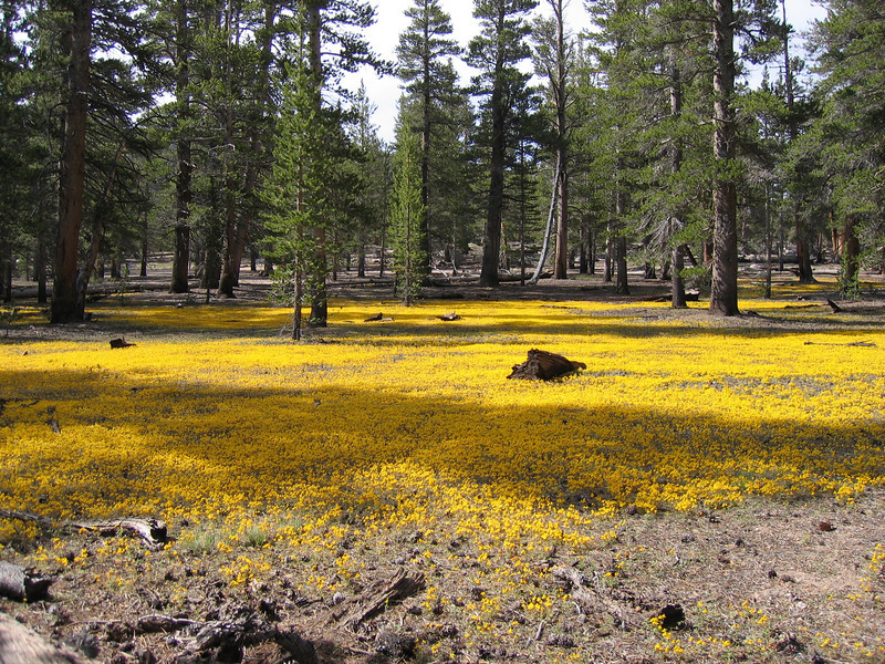 Beautiful yellow carpet