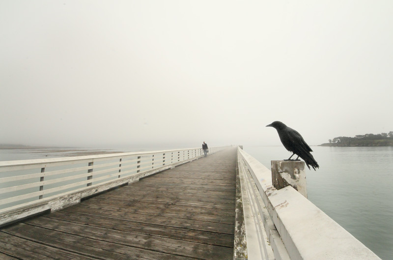 crow on pier.jpg