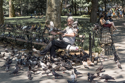 The Birdman of Washington Square