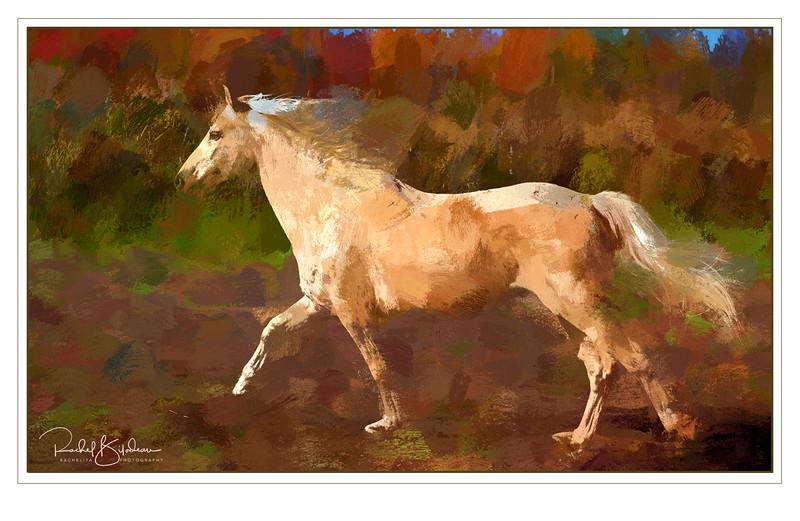 st-amable-161015-FFF-10396-alpaca-canvas5-framed and sig.jpg
