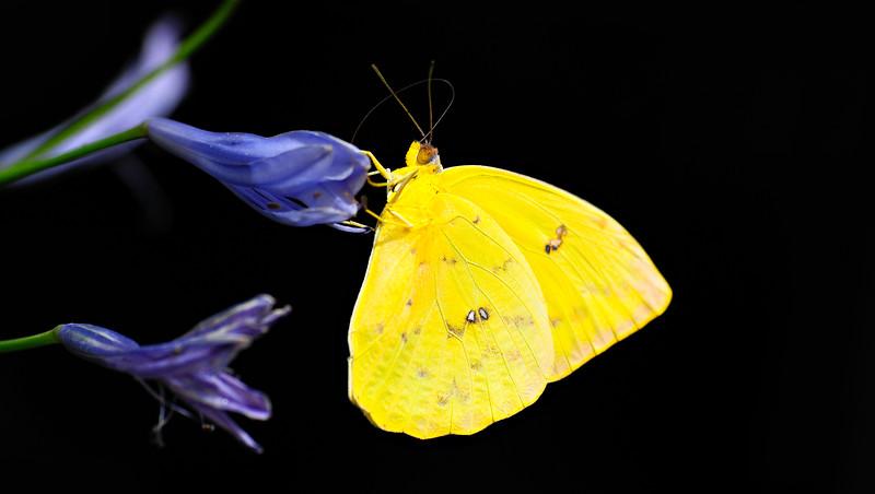 Butterfly-069.jpg